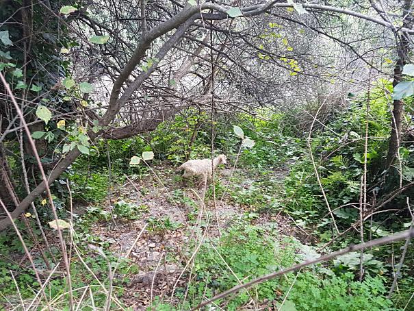 gurne dell'alcantara natura incontaminata foto taobook
