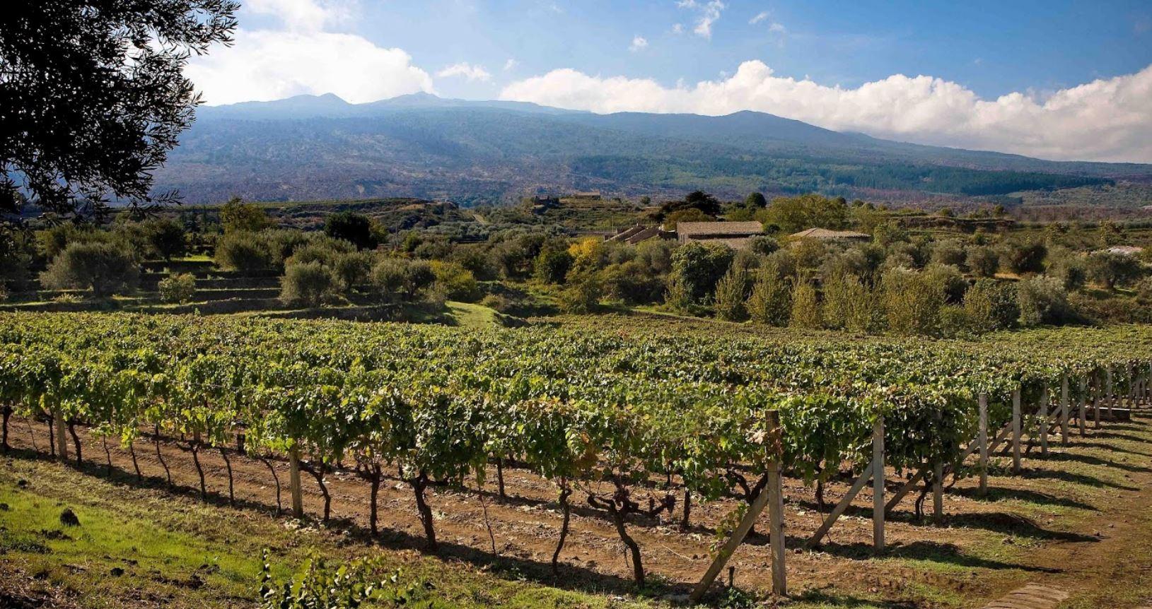 antichi vinai etna doc vino