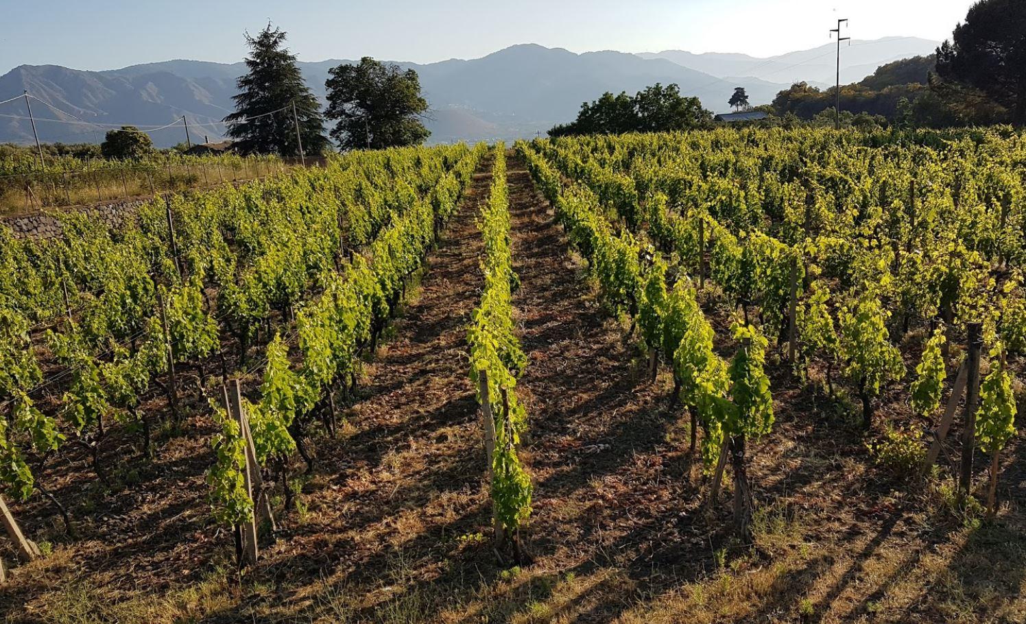 cantine badala vino etna doc