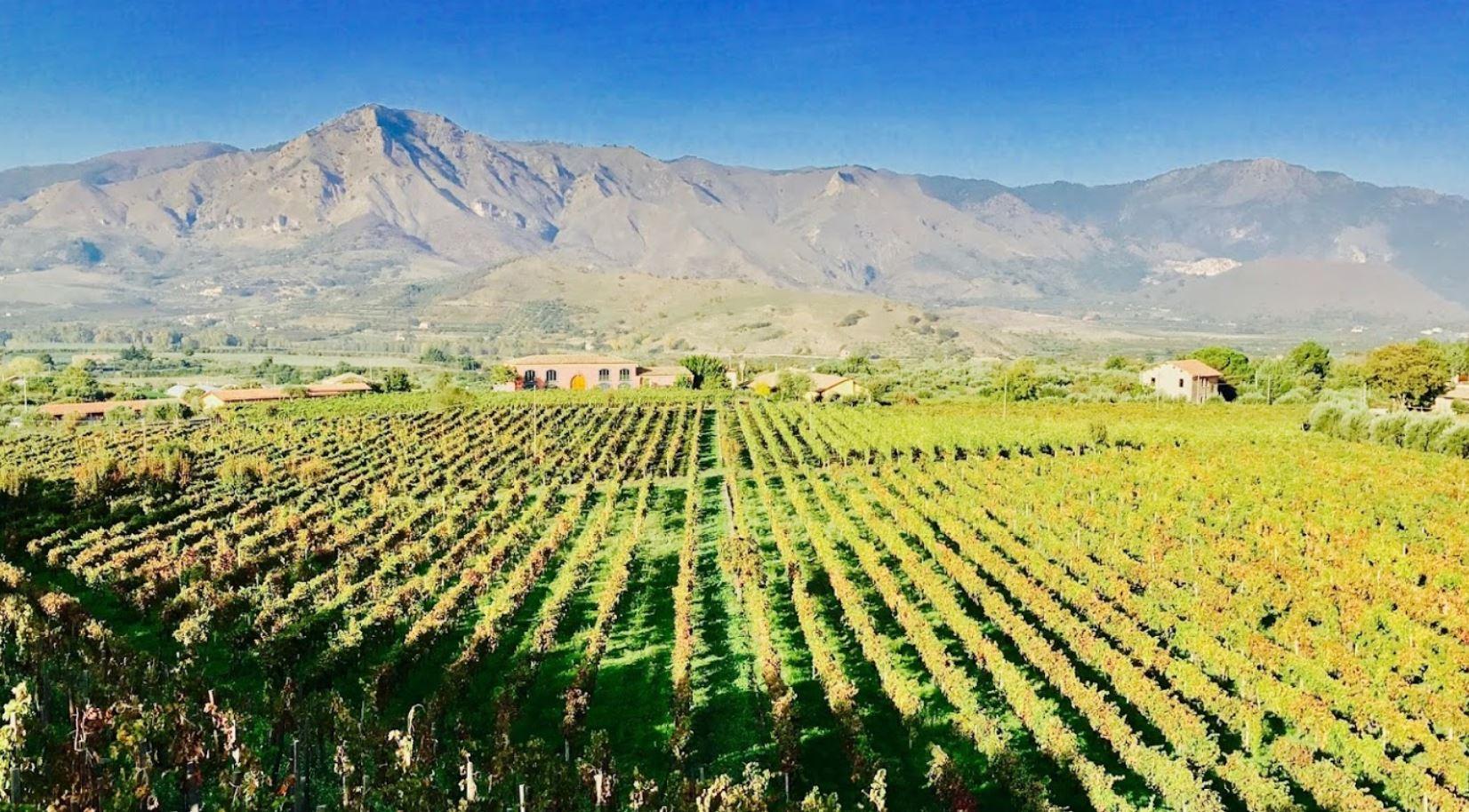 terrenere cantina etna doc vini
